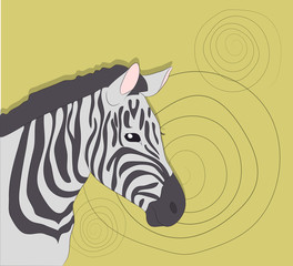 portrait of zebra on a colored background