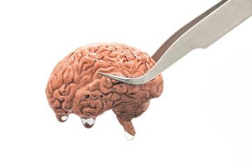 Human brain for brain transplantation
