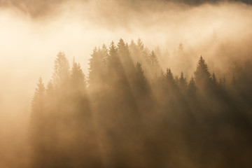 Geroldsee forest during autumn day over mountain peaks, Bavarian