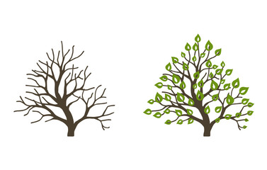 Bush with leaves and without on white background. Bush at the different seasons of the year