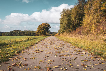 Cycle path in autumn with leaves