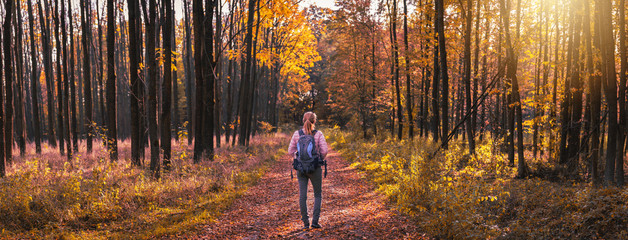 Woman hiking in forest at autumn season. Traveler with backpack on footpath in woodland. Panoramic picture