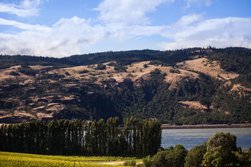 Rural Vineyard