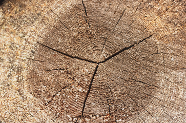 Closeup of single round sliced wood log with growth rings, cracks and scratches. Wooden background with cutting tree trunk, country concept for warm winter stove heating, sauna, bath house
