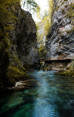 Photo sur Toile Riviere Vintgar gorge Slovenia - The famous Vintgar gorge Canyon with wooden pats in the natural Park Triglav.