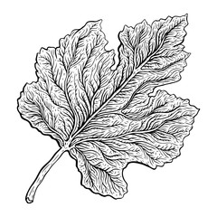Beautiful detailed leaf. Botanical Hand drawn Vector Outline leaves, isolated on white background. Hand drawn Monochrome realistic illustration