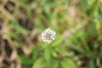 Flor pequeña acercamiento