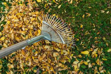 Zusammenrechen von gelben Blättern