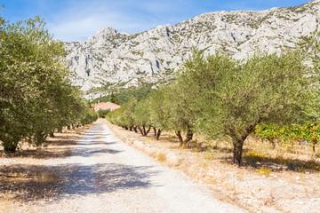 Foto auf AluDibond Gebirge montagne Sainte-Victoire, Provence, France