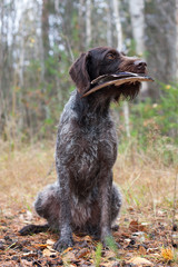 hunting dog sits with a duck wing
