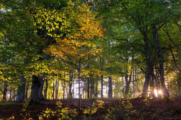 Beech forest at Entzia mountain range, Alava, Spain