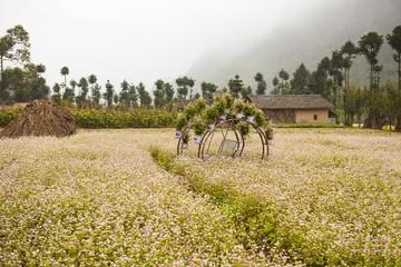 DONG VAN, HA GIANG, VIETNAM, October 13th, 2018: Hill of buckwheat flowers Ha Giang, Vietnam. Hagiang is a northernmost province in Vietnam