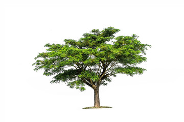 Tree isolated on white background high resolution for graphic decoration