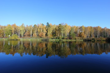 autumn forest reflected in the lake