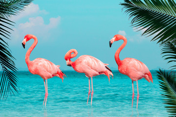 Garden Poster Flamingo Vintage and retro collage photo of flamingos standing in clear blue sea with sunny sky with cloud and green coconut tree leaves in foreground.