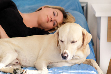 Woman with cute dogs at home. Handsome girl resting and sleeping with her dog in bed in bedroom. Owner and dog sleeping in sofa. Yellow labrador retriever relax. Portrait of woman and her best friend.