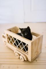 petit chaton noir dans un camion en bois