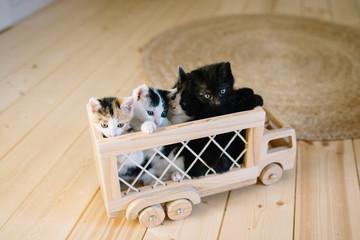 petits chatons dans un camion