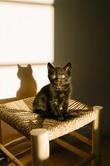 Petit chaton noir assis sur un tabouret bois