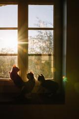 3 chatons appuyés sur une fenêtre avec le couché du soleil