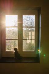 petit chat devant une fenêtre à contre jour