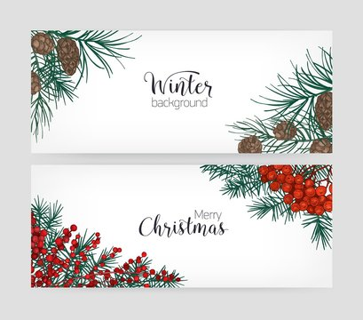 Set of horizontal holiday banners or backdrops with pine tree branches, cones, holly berries and place for text on white background. Elegant hand drawn vector illustration in vintage realistic style.