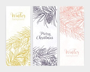 Bundle of vertical seasonal banners or backdrops with pine tree branches and cones hand drawn with contour lines and place for text on white background. Winter vector illustration in realistic style.