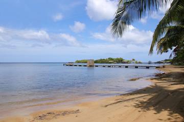 Caribbean, Public Beach Roatan, Palm