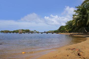 Caribbean, Public Beach Roatan, Coconut, Palm