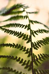 vintage soft green fern leafs on blurred background with bokeh