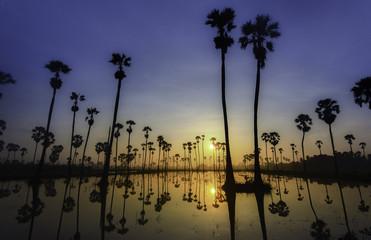 Sunrise with twin sugar Palm tree
