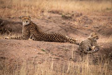 Cheetah lies beside cub on earth mound