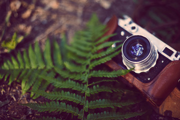 Vintage analog retro film camera with fern in the forest