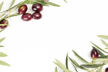 olive tree twigs
