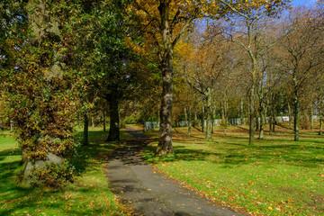 Dense Autumnal Trees & Woodland in Bellahouston Park Glasgow