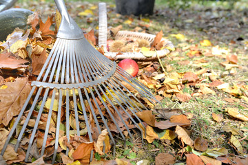 rake and leaves on a garden
