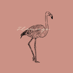Flamingo vector illustration.