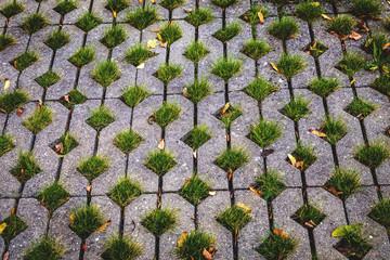 grass grows through pavement paving