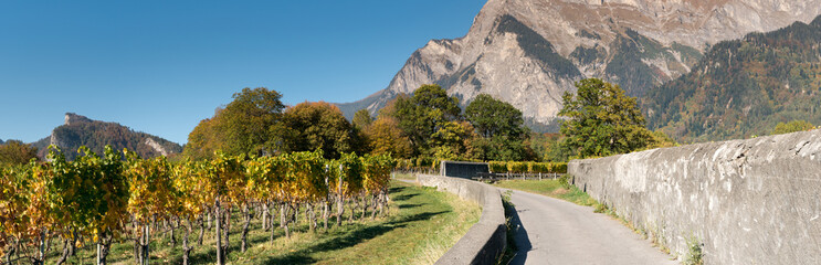 Wall Mural - countryside mountain landscape with golden leaf vineyards and rock walls in Switzerland in late autumn