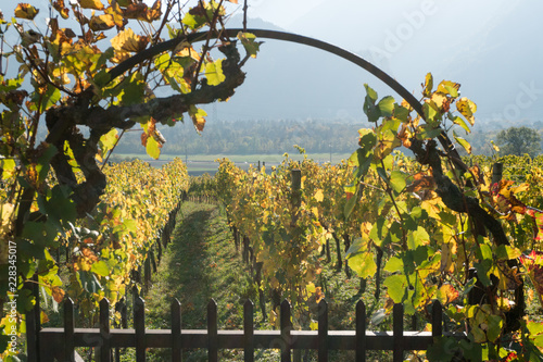 Wall mural metal garden gate and arch with grapevine and vineyard in golden fall colors in the Swiss Alps near Maienfeld