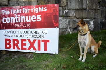 A dog sits next to an anti-Brexit sign near the border with Ireland in Newry, Northern Ireland