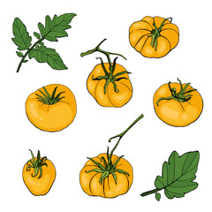 Set with yellow tomatoes and leaves on white background. Vector. Illustration