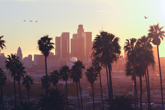 Palm trees with buildings in the background