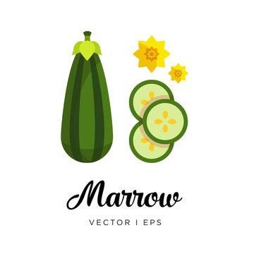 Green fresh striped marrow vector editable illustration. Ripe green zucchini sliced, seeds, flowers, simple flat style..Striped Marrow