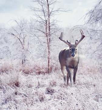 deer in the winter forest