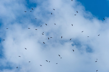 a lot of bird kite in the sky over the fields