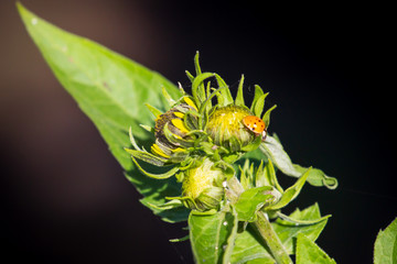 Little cute ladybug on the yellow flower