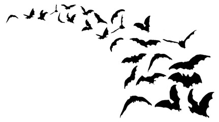 Flying bats in the nightsky