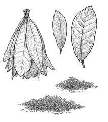 Tobacco plant leaf illustration, drawing, engraving, ink, line art, vector