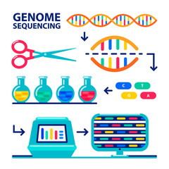genome sequencing sheme. Human genome project. Flat style vector illustration.